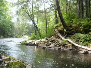 Ridge to River