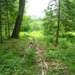 Trolley Marsh Preserve