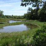 Meadow Brook Preserve  Benefits Climate