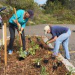 Langlais Native Plants for Pollinators
