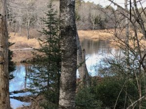 river view through trees