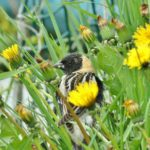 Birds in the Grass